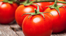 Manufacture of Tomato Sauces and Ketchups - ZH